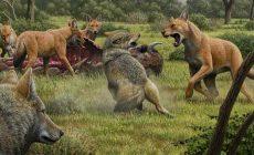 Ученым впервые удалось расшифровать ДНК древних ужасных волков