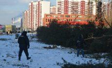 Московские власти незаконно вырубают краснокнижный лес под новую трассу